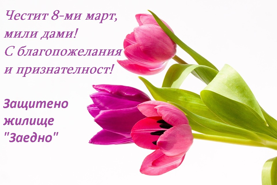 tulips_8_march